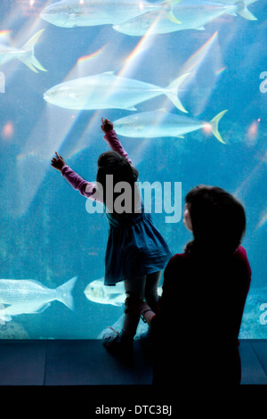 Young girl and grandmother looking at fish in aquarium - Stock Photo