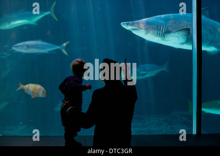 Young boy and father watching fish in aquarium - Stock Photo