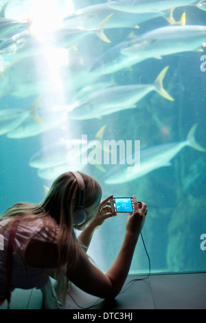 Young woman photographing fish on smartphone in aquarium - Stock Photo