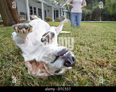 Dog rolling over on grass, woman in background - Stock Photo