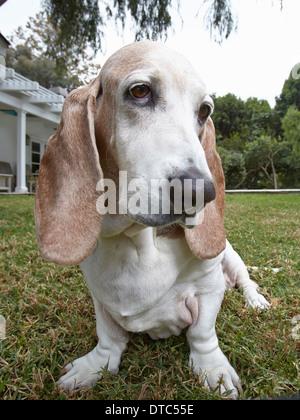 Close up of dog sitting on grass - Stock Photo