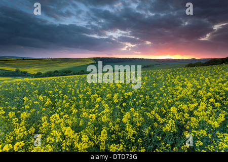 Spring sunset in South Downs National Park, East Sussex, England. - Stock Photo