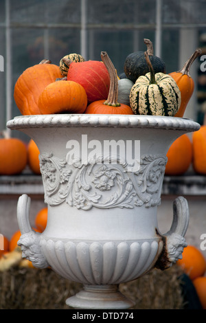 Harvest display of pumpkins, gourds and squashes, in a Grecian urn London England UK - Stock Photo