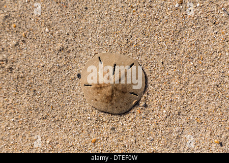 Sand Dollar Island South Carolina