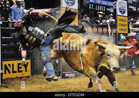 St. Louis, Missouri, USA. 16th Feb, 2014. February 16, 2014: Rider Guilherme Marchi is thrown from bull Wolverine - Stock Photo