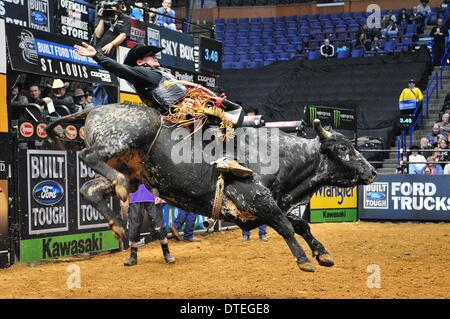 St. Louis, Missouri, USA. 16th Feb, 2014. February 16, 2014: Rider Chase Outlaw on bull Western Hauler during the - Stock Photo