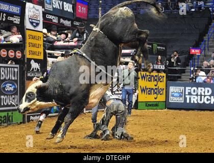 St. Louis, Missouri, USA. 16th Feb, 2014. February 16, 2014: Kasey Hayes on bull Rango during the championship round - Stock Photo