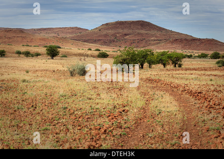 Group of acacia trees in African desert along road leading through the desert to the Damaraland. - Stock Photo