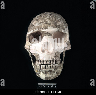 Homo sapiens cranium (Skhul 5)