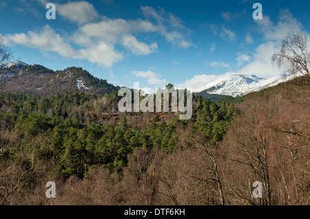 GLEN AFFRIC SCOTLAND WITH CALEDONIAN PINE TREES AND WINTER SNOW ON  THE HILLS - Stock Photo