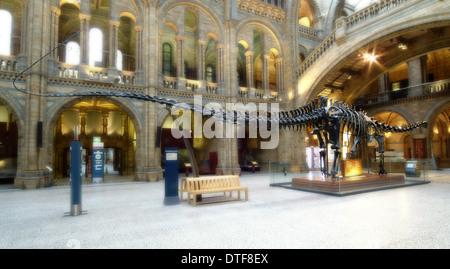 Diplodocus carnegiei - Stock Photo