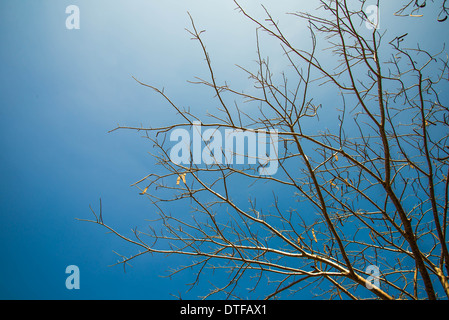 Dry tree in country of Thailand. Arid - Stock Photo
