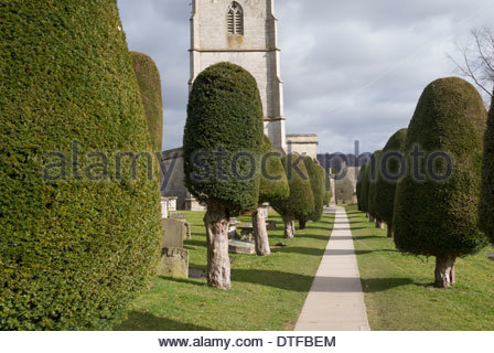 Avenue of clipped yews in the churchyard of St Mary's Church, Painswick, Gloucestershire - Stock Photo
