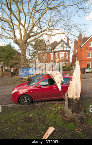 Large tree in East Molesey crushes two cars in a February storm - Stock Photo