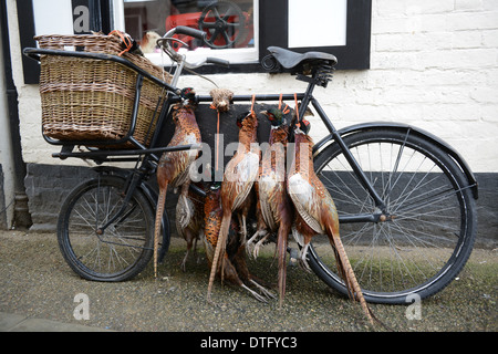 Dead Pheasant game birds on old bike outside butchers shop in Ludlow Britain Uk - Stock Photo