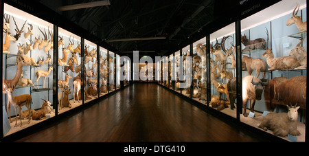 The Natural History Museum at Tring - Stock Photo