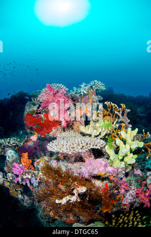 A multi colored tropical coral reef against a blue water background with fish hovering the reef. - Stock Photo