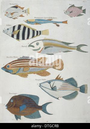 Colourful illustration of eight fish - Stock Photo