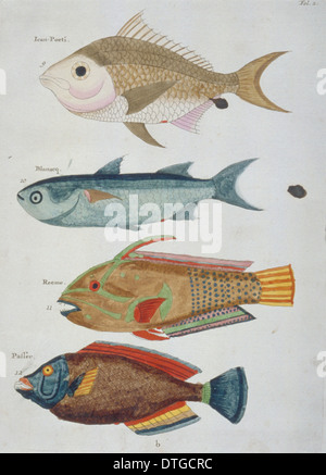 Colourful illustration of four fish - Stock Photo