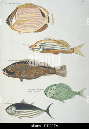 Colourful illustration of five fish - Stock Photo