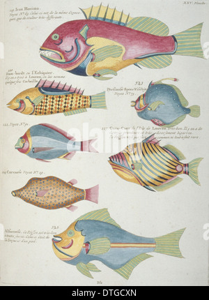 Colourful illustration of seven fish - Stock Photo