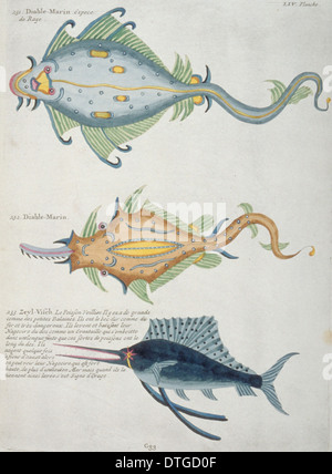 Colourful illustration of Makaira nigricans, blue marlin and two rays