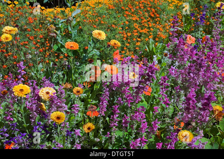 Yellow and orange Marigold (Calendula) and other flowers in summer, Montreal, Quebec, Canada - Stock Photo