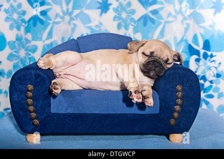 Sleeping Pug, puppy lying on a miniature sofa - Stock Photo