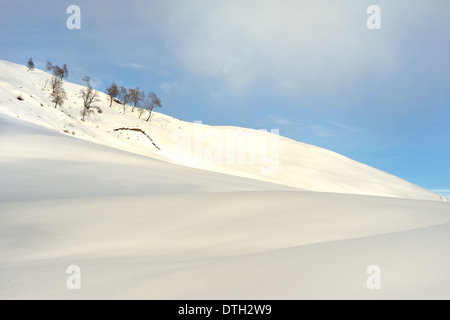 Snow field and trees - Stock Photo