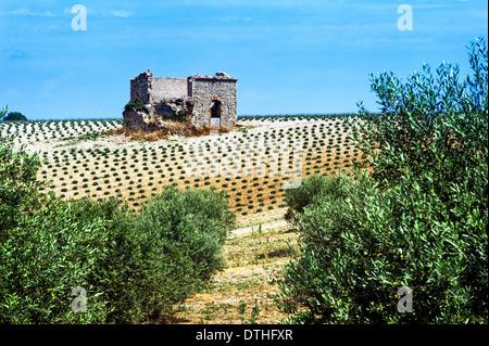 Europe, France, Alpes-de-Haute-Provence, 04, Regional Natural Park of Verdon, Valensole. Ruin in a field of lavender. - Stock Photo