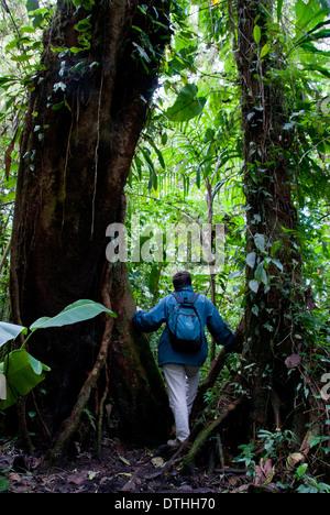 SANTA ELENA -MONTEVERDE CLOUD FOREST RESERVE , PUNTARENAS PROVINCE. COSTA RICA. CENTRAL AMERICA. - Stock Photo
