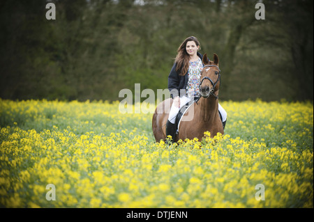 A woman riding on a brown horse through a flowering yellow mustard crop in a field  England - Stock Photo