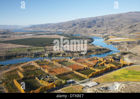 Orchards, Vineyards and Lake Dunstan, Bannockburn, near Cromwell, Central Otago, South Island, New Zealand - aerial - Stock Photo