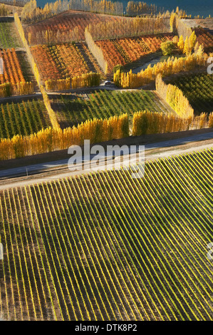 Orchards and Vineyards, Bannockburn, near Cromwell, Central Otago, South Island, New Zealand - aerial - Stock Photo