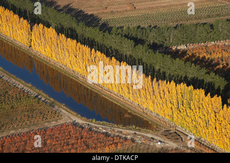 Orchard and Poplar Trees, Ripponvale, near Cromwell, Central Otago, South Island, New Zealand - aerial - Stock Photo