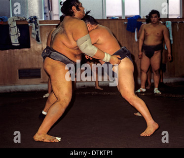 Sumo wrestling match - Stock Photo