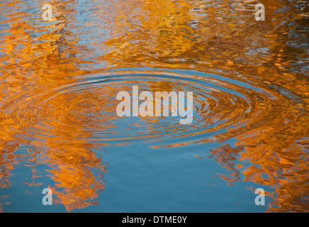 Golden Autumn tree lined reflections and ripples of trout rising on the Boise River, Boise, Idaho, USA - Stock Photo