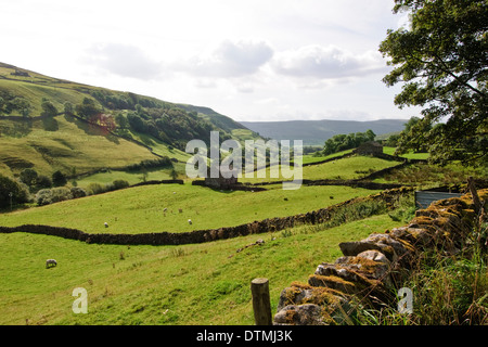 Stone Dykes and pasture in the Yorkshire Dales - Stock Photo