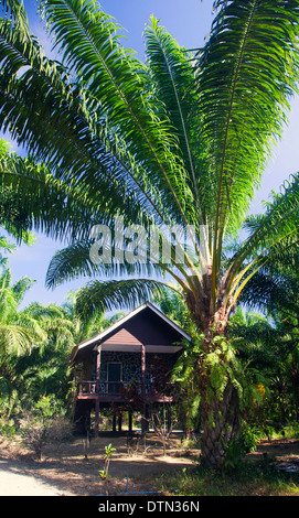 Wooden cottage among palm trees - Stock Photo