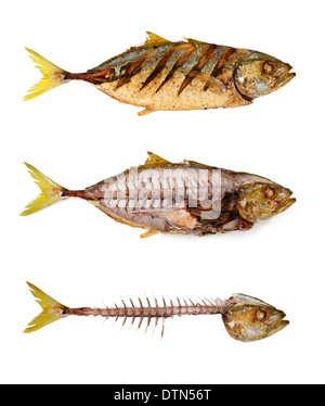 fried fish and fishbone - Stock Photo