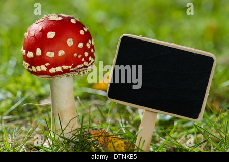 Toadstools with sign in a green meadow - Stock Photo