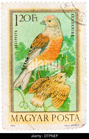 stamp printed in Hungary, shows Linnets, without inscription, from the series 'Hungarian Birds', circa 1973 - Stock Photo