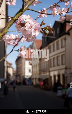 Pedestrian zone, Bamberg in spring - Stock Photo