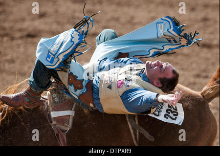 Tucson, Arizona, USA. 22nd Feb, 2014. WYATT HANCOCK took 76 points in bareback at the second-to-last performance - Stock Photo