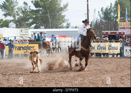 Tucson, Arizona, USA. 22nd Feb, 2014. LEE KIEHNE ropes his steer during the team roping event at the Fiesta de los - Stock Photo