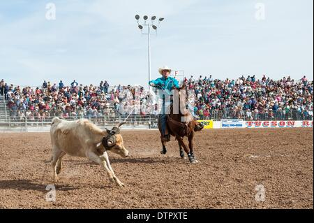 Tucson, Arizona, USA. 22nd Feb, 2014. DOYLE HOSKINS ropes his steer during the team roping event at the Fiesta de - Stock Photo