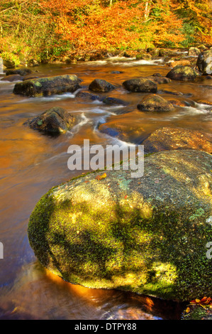 Whitewater rapids in the autumn on the River Aune - Dartmoor National PArk - Stock Photo