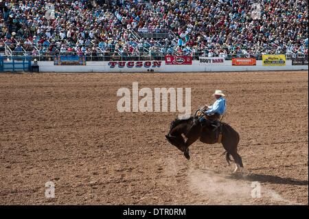 Tucson, Arizona, USA. 22nd Feb, 2014. MAX FILIPPINI rides during the saddle bronc event at the second-to-last performance - Stock Photo
