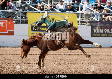 Tucson, Arizona, USA. 22nd Feb, 2014. ZACK BROWN hangs on to to his horse during bareback at the second-to-last - Stock Photo