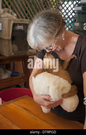 Sanctuary owner holding baby orphan Hoffmann's Two-toed Sloth (Choloepus hoffmanni)  the Sloth Sanctuary of Costa - Stock Photo